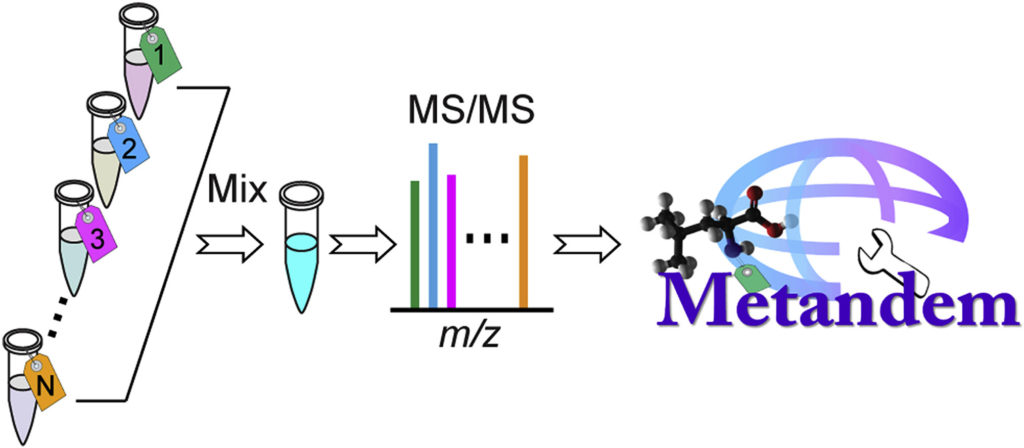 Graphical abstract for Metandem paper published by Hao et al in Analtica Chimica Acta demonstrating the software's utility in  isobaric labeling, integrating feature extraction, and metabolite quantification.